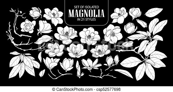 Line Drawing Flower Vector : Set of isolated white silhouette magnolia in 21 styles. cute eps