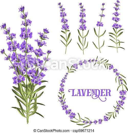 Set Of Lavender Flowers Elements Botanical Illustration