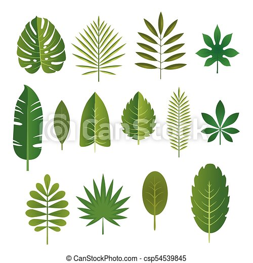 Set Of Leaves Of Tropical Plants Vector Illustration Set Of