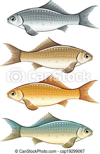 Set Of Live Colour Fish