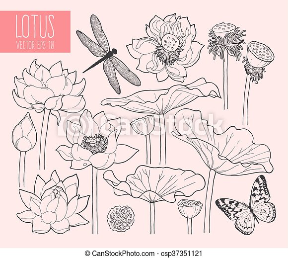 Set of lotus flowers and leaves - csp37351121