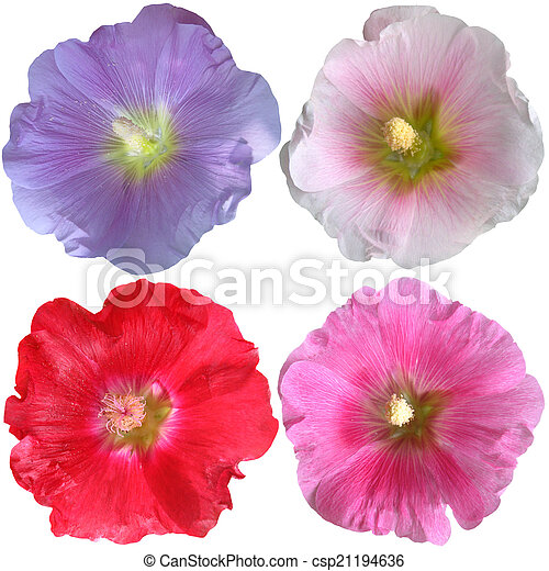 Set of mallow flowers on white background - csp21194636