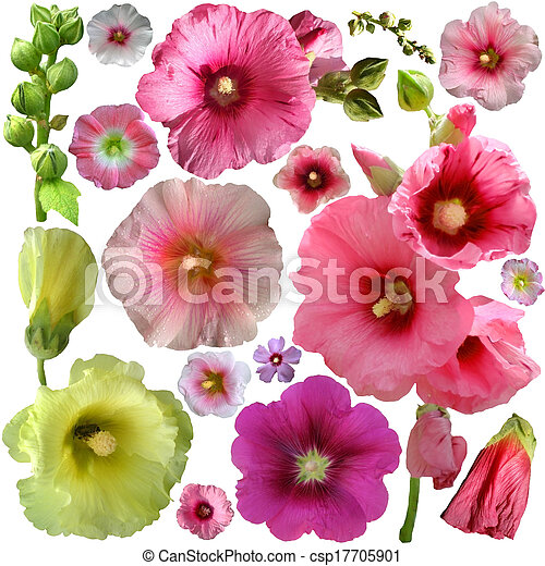 Set of malva flower on a white background - csp17705901