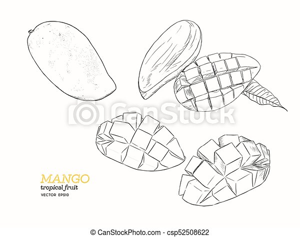 Set Of Mangoes Hand Draw Sketch Vector Set Of Mangoes Tropical