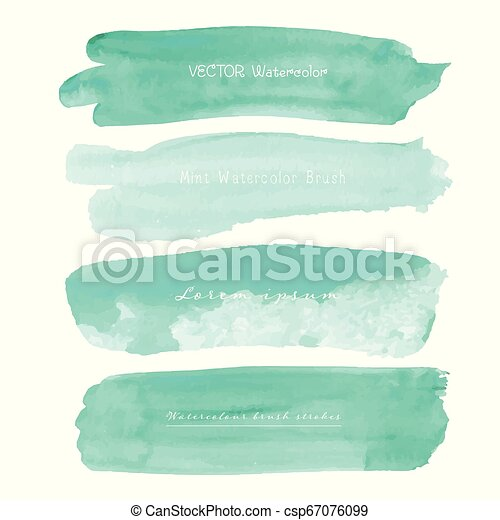 Set of mint watercolor on white background, Brush stroke watercolor, Vector illustration. - csp67076099