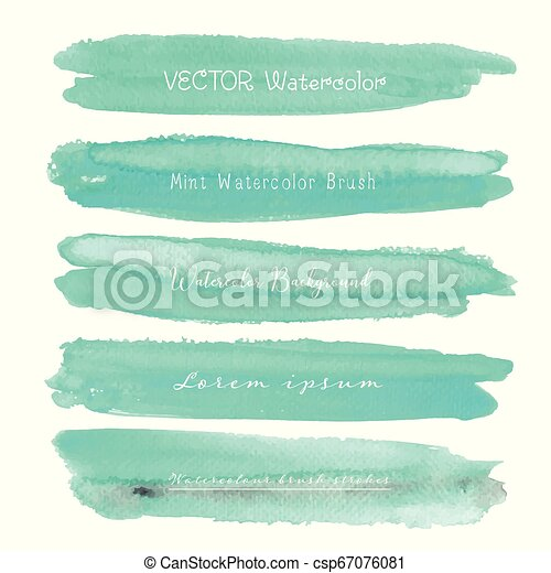 Set of mint watercolor on white background, Brush stroke watercolor, Vector illustration. - csp67076081