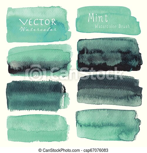 Set of mint watercolor on white background, Brush stroke watercolor, Vector illustration. - csp67076083