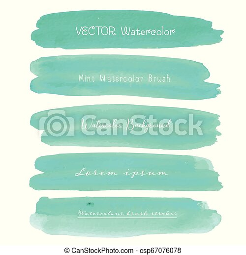 Set of mint watercolor on white background, Brush stroke watercolor, Vector illustration. - csp67076078