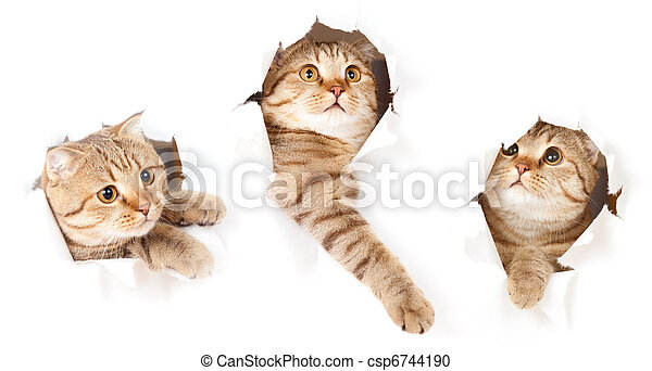 set of one cat in paper side torn hole isolated - csp6744190