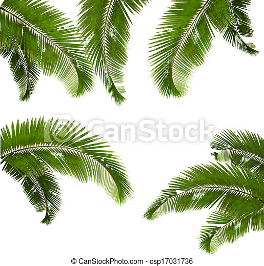 Set of palm leaves on white background. Vector illustration. - csp17031736