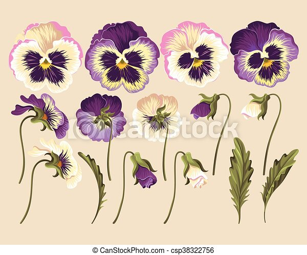 Set of pansy flowers - csp38322756