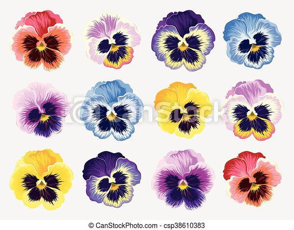 Set of pansy flowers - csp38610383