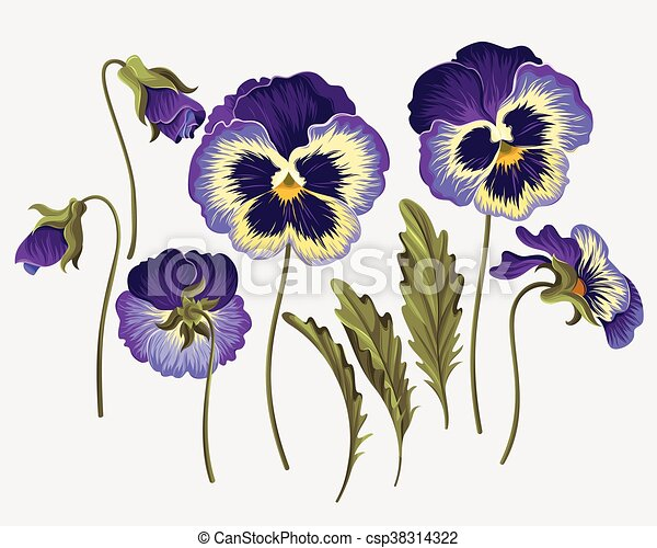 Set of pansy flowers - csp38314322