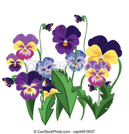 Set Of Pansy Flowers Violet Bloom Garden Plant Vector Illustration