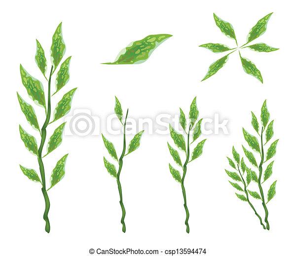 Set of Pedilanthus Tithymaloides Leaves on White Background - csp13594474