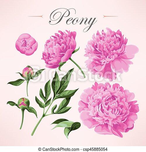 Set of peonies - csp45885054