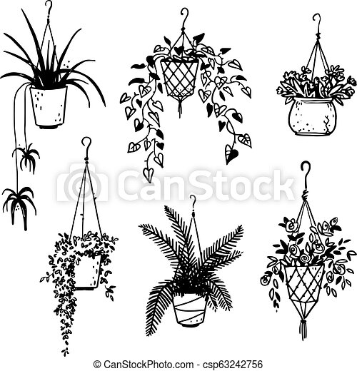 Set of potted house plants, vector sketch. | CanStock