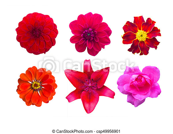 Set of red garden flowers isolated. marigold, Dahlir . Lily and zinnia - csp49956901