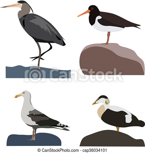 Set of sea birds, isolated vector.
