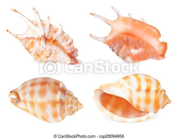 Set of Seashell, isolated on white. Vector illustration - csp28094956