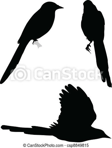 Set of silhouettes of magpies - csp8849815
