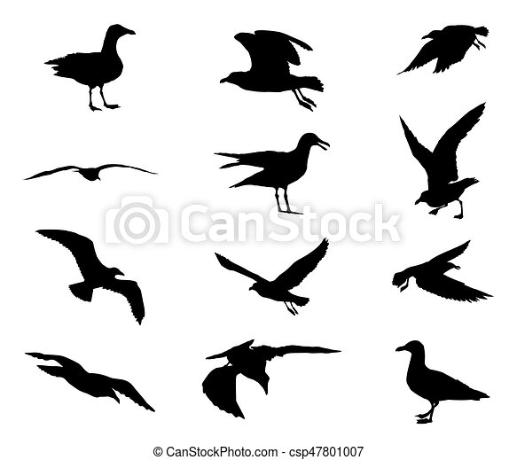 Set of silhouettes of seagulls - csp47801007