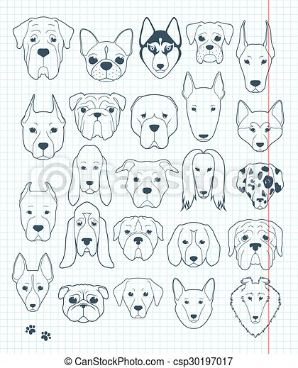 Pictures Of Different Breeds Of Pitbull Dogs