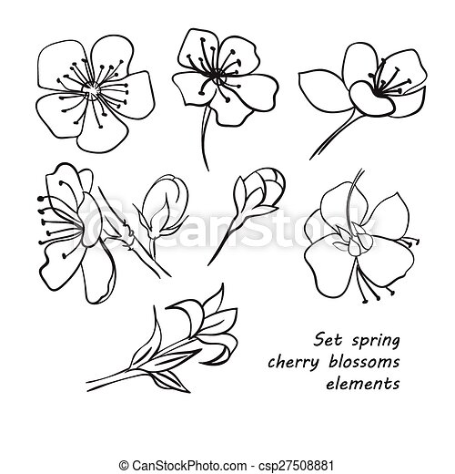 Set of spring cherry blossom flowers. Hand drawing. - csp27508881