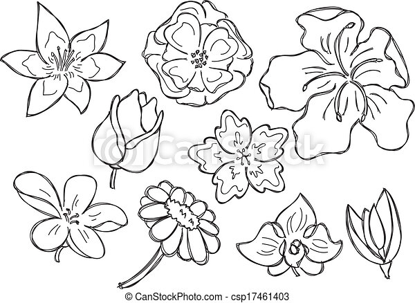 Set Of Spring Flower Isolated On White Background