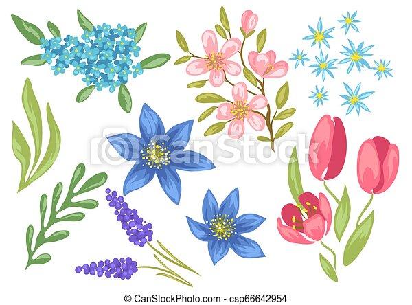 Set of spring flowers. Beautiful decorative natural plants. - csp66642954
