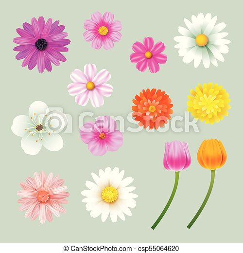 Set of spring flowers colorful isolated background. - csp55064620