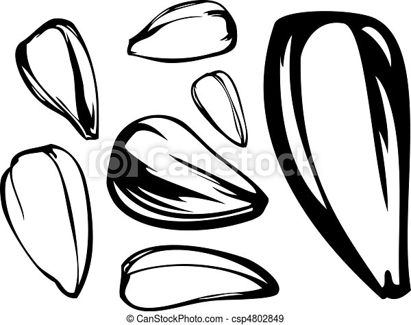 set of sunflower seed - csp4802849
