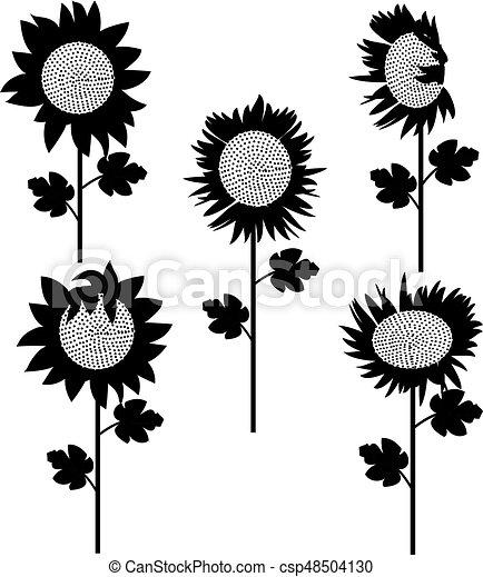 set of sunflowers silhouette 3 - csp48504130
