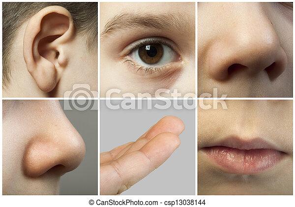 Set of the human senses - csp13038144