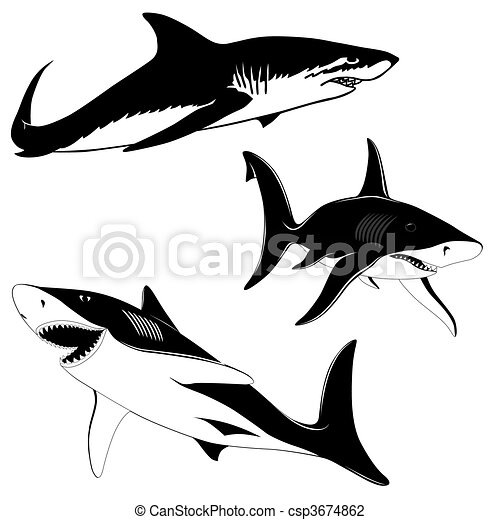 Set of three sharks - csp3674862