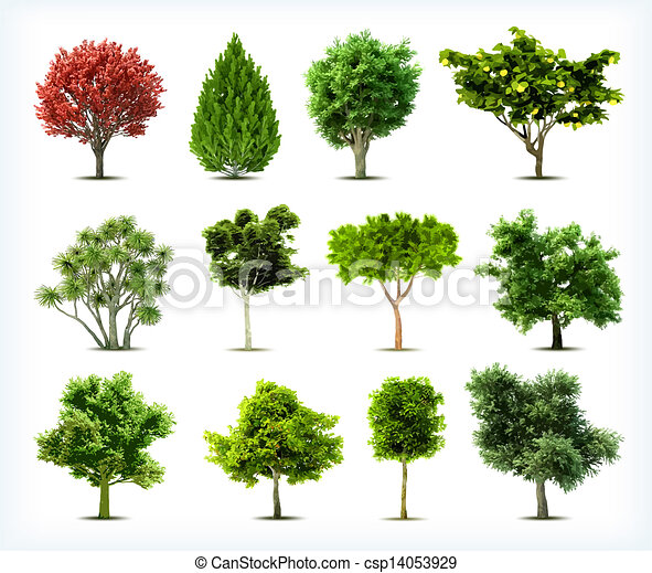 Set of trees isolated. Vector - csp14053929