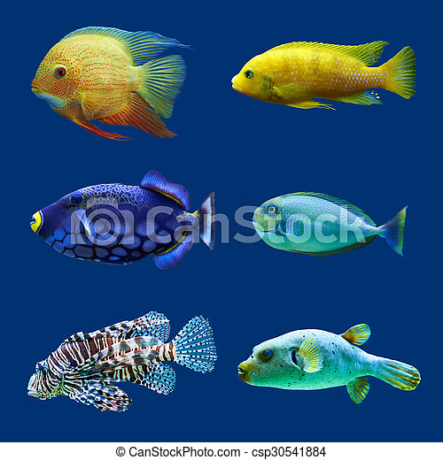 Set of tropical fish. Isolated on blue. Hight res. - csp30541884