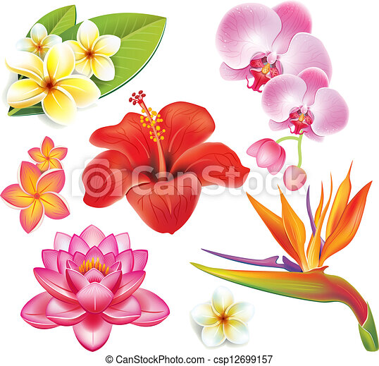 Set of tropical flowers  - csp12699157