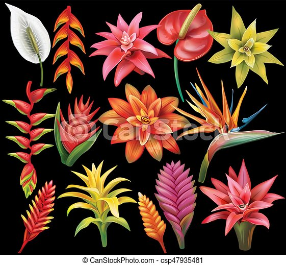 Set Of Tropical Flowers On Blacl