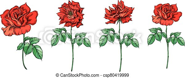 Set of vector floral arrangements with rose flowers. - csp80419999