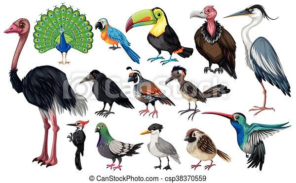 Set of wild birds - csp38370559