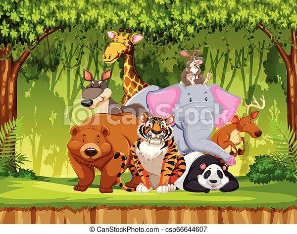 Set Of Wildlife Animals Illustration Canstock