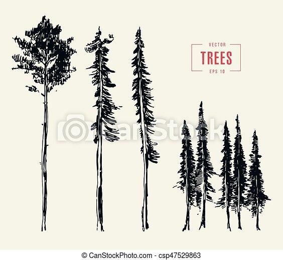 Set pine trees illustration engraved style drawn set of pine trees set pine trees illustration engraved style drawn thecheapjerseys Gallery
