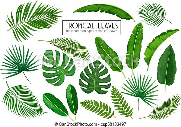 Vector Set Tropical Leaves Jungle Exotic Leaf Philodendron Areca Palm Royal Fern Plumeria And Etc Illustration For Canstock Anyway, what are the types of tropical flowers that are suitable for home decorations? https www canstockphoto com set tropical leaves 58133497 html