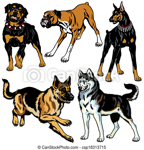 set with dogs - csp18313715