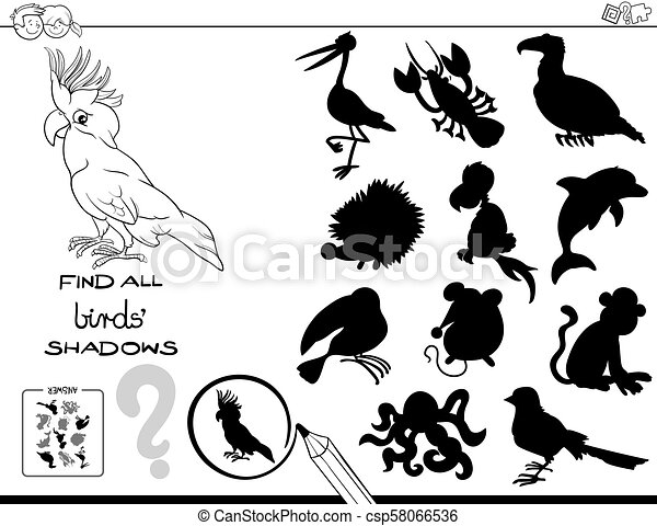 Shadow Educational Game With Birds Color Book