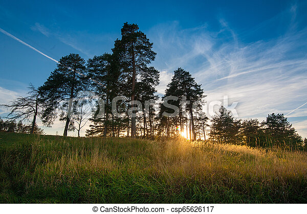 Shadow of pine trees and sunset, West light in the evening. - csp65626117