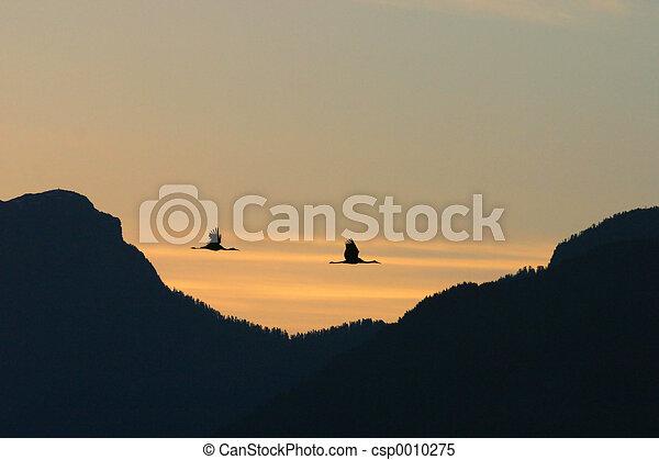 Shadows at Dawn - csp0010275