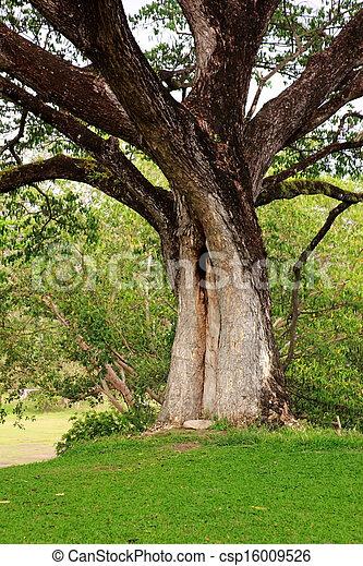 Shaft of tree - csp16009526