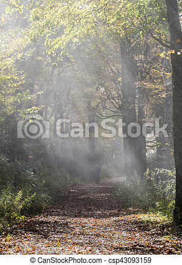 Shafts of Light on Foggy Trail - csp43093159